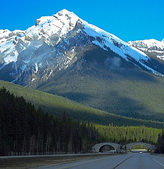 Massive Mountain - Massive Mountain seen from Icefields Parkway