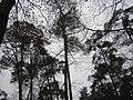 Mastbos forest.jpg
