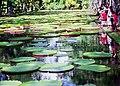 Mauritius.- Jardin botanique Sir Seewoosagur Ramgoolam (2).jpg