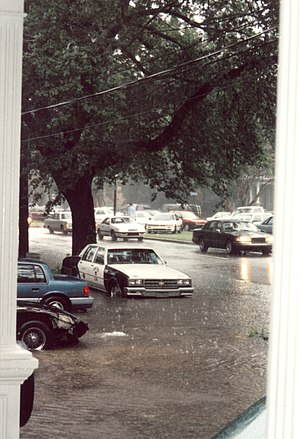 May 1995 Louisiana flood - Rising water on Napoleon Avenue, Uptown New Orleans, early in the disaster; water continued to rise into the night.