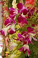 May flower 11.jpg