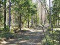 Mežs Jūgu purva ziemeļrietumu malā.jpg