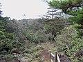 Medellin, Antioquia, Colombia - panoramio (8).jpg