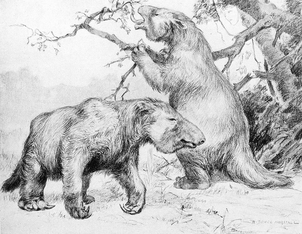 File:Megatherium americanum.jpg - Wikimedia Commons