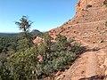 Mescal Trail, Sedona, Arizona - panoramio (16).jpg