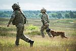 Military Working Dogs undergo Live Fire Tactical Training. MOD 45160280.jpg