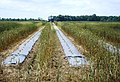 Mixed Crops row by row - panoramio.jpg