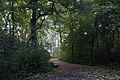 Mogila Wood a, Mogila, Nowa Huta, Krakow, Poland.jpg