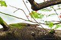 Monitor lizard,.jpg