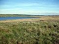 Moorland above Llyn Aled - geograph.org.uk - 836794.jpg