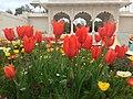 More Than a Few Flowers (15190983179).jpg