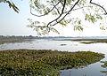 Motijheel Lake View murshidabad By Ansuman Bhattacharya.jpg