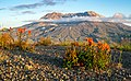 Mount St. Helens and wildflowers in summertime from Johnston Ridge.jpg