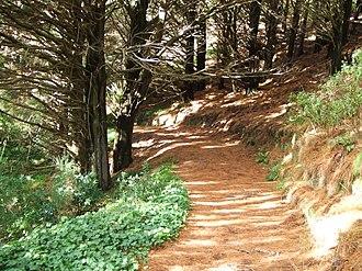 Mount Victoria, Wellington - the road to Bree