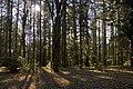 Mount Wilson garden - panoramio - Maksym Kozlenko (2).jpg