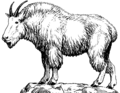 Mountain Goat 1 (PSF).png