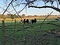 Moutons Pré Route Marillat - Saint-Cyr-sur-Menthon (FR01) - 2020-10-31 - 1.jpg
