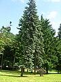 Nałęczów (Naleczow), Poland, Lubelskie - panoramio (11).jpg