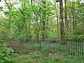 Nan Nook Wood - geograph.org.uk - 1278630.jpg