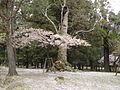 Nara Japan 6.jpg
