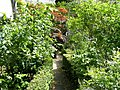 Narrow path in Eccleston Square Gardens - geograph.org.uk - 1297589.jpg