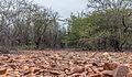 Nature in Isla Margarita, Nueva Esparta, Venezuela 08.jpg