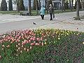 Nature in Smolensk - 47.jpg