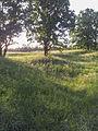NaturschutzLassee20140524 194522.jpg