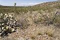 Near East Whitetail Creek - Flickr - aspidoscelis.jpg