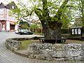 Nentershausen-Gerichtsplatz im Westen nahe Kirche mit Linde (geschätzt 600 Jahre alt) und Steinring-04052013.JPG