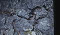 New limestone pavement. Roots in grykes (24998522908).jpg