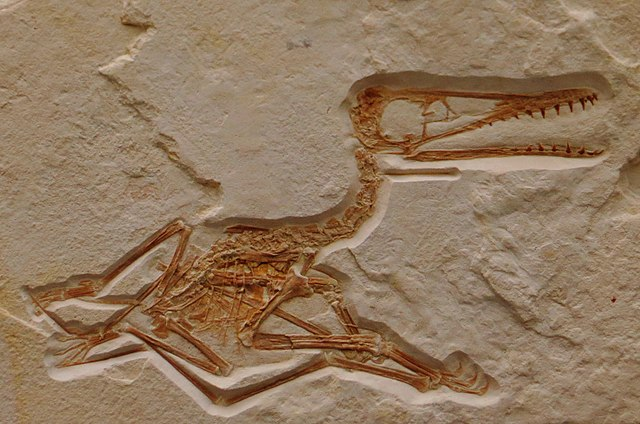 New pterosaur 45