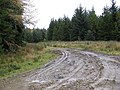 Newish forest road. - geograph.org.uk - 276782.jpg