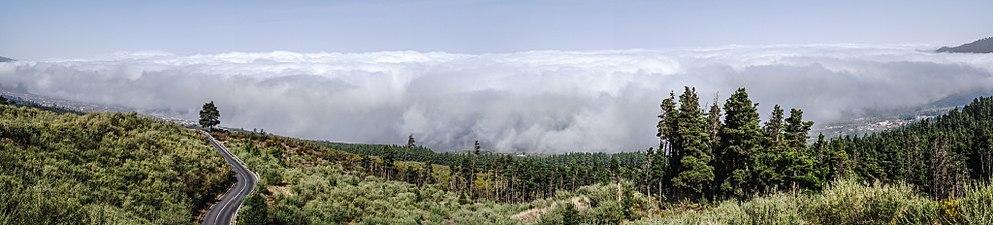 Niebla en Corona Forestal.jpg