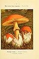 Nouvel atlas de poche des champignons comestibles et vénéneux (Pl. 1) (6459658015).jpg