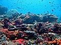 Nusa Lembongan Reef.jpg