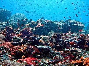 Reef - Nusa Lembongan Reef, Bali, Indonesia.