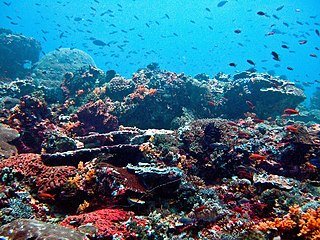 Reef A bar of rock, sand, coral or similar material, lying beneath the surface of water
