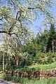 Oberharmersbach 3.jpg