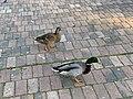 Oiseaux Parc Hôtel Ville Fontenay Bois 3.jpg