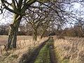 Old Track to Cardowan House - geograph.org.uk - 123472.jpg