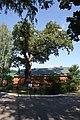 Old oak in Voronezh Biosphere Reserve.jpg