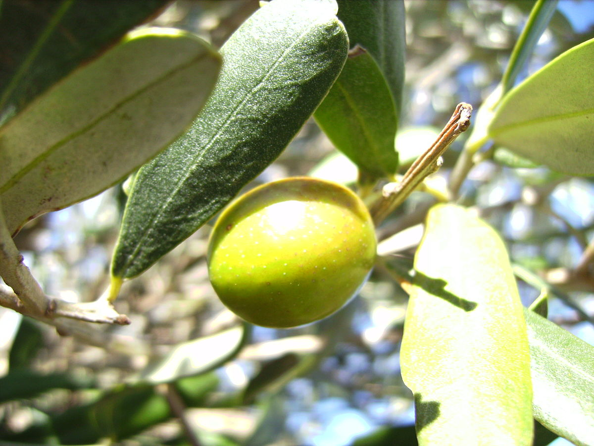 The Green Olive Restaurant Menu