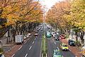 Omotesando-November-01.jpg