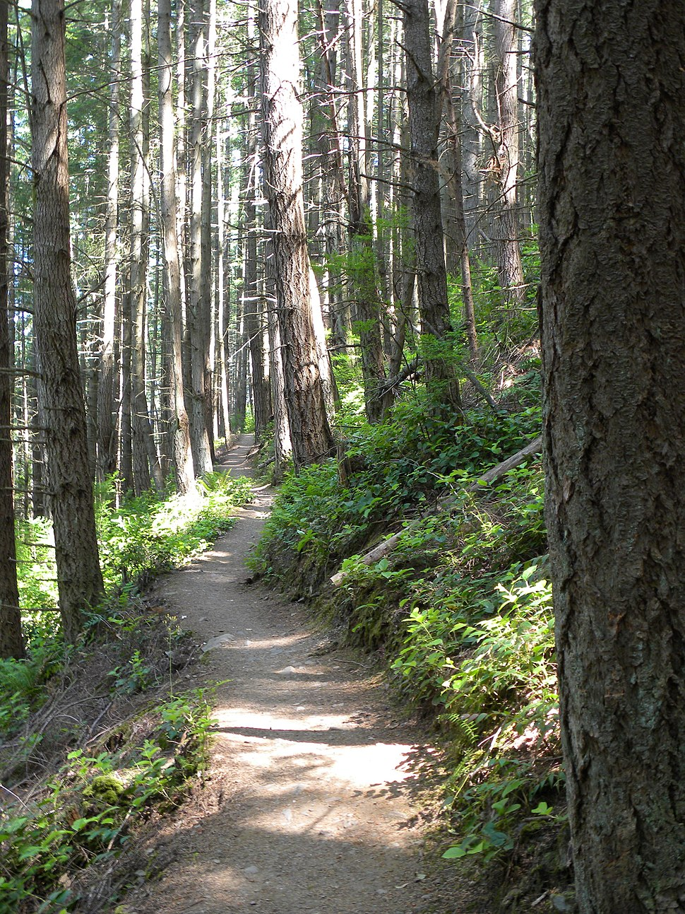 On the Pacific Northwest Trail