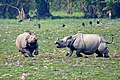One horn Rhino are seen at the Kaziranga National Park in Assam.jpg