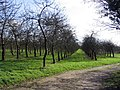 Orchard at Elwell Farm, Waytown. - geograph.org.uk - 348575.jpg