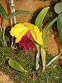 Orchid-001.jpg