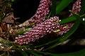 Orchid (29723715612).jpg