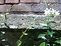 Orto botanico Brera a Milano 348.jpg